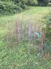 Large Lot of tomato cages